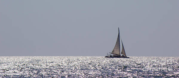 Sailboat Poster featuring the photograph In Search Of The Perfect Sunset by Cody Frazee