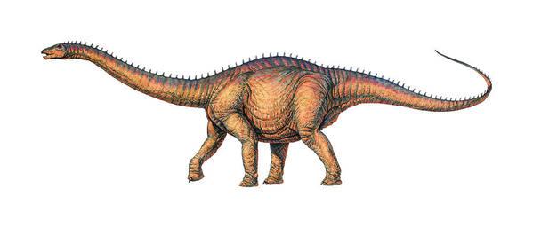 Thunder Lizard Poster featuring the photograph Apatosaurus Dinosaur by Joe Tucciarone