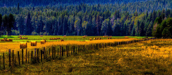 Hay Poster featuring the photograph Idaho Hay Bales by David Patterson