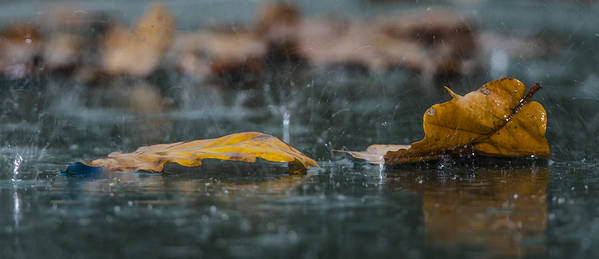 Autumn Poster featuring the photograph Autumn Rain by Shay Weiss