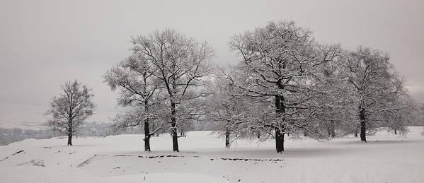 Winter Poster featuring the photograph Oaks In Winter by Gabriela Insuratelu