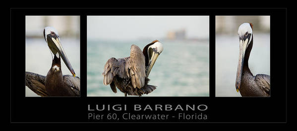 Pelican Poster featuring the photograph Pier 60 Number 1 by Luigi Barbano BARBANO LLC