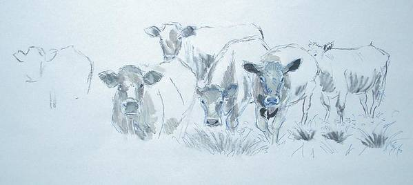 Mike Jory Cows Bulls Cattle Sheep Goats Horses Fields Countryside Farm Agriculture Rural Wildlife Nature Animal Herd Hills Hedges British Gloucestershire Animals Poster featuring the painting Cow Drawing by Mike Jory