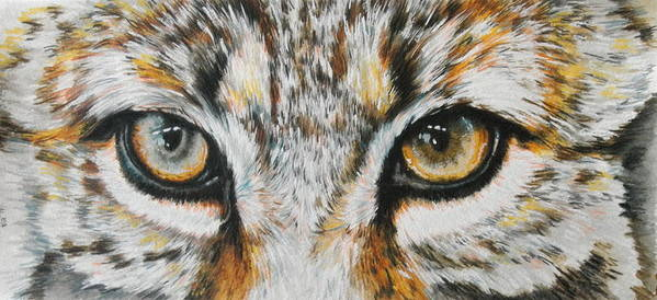 Bobcat Poster featuring the painting Eye-catching Bobcat by Barbara Keith