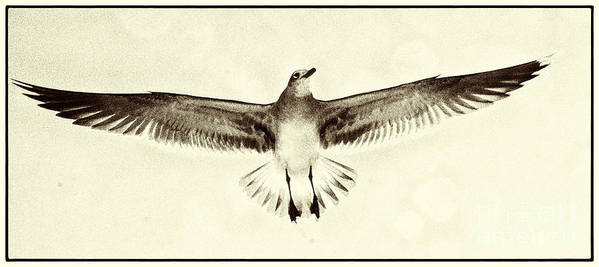Beach Poster featuring the photograph The Perfect Wing by Jim Moore