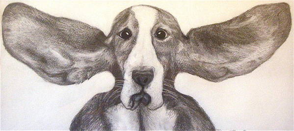 Basset Hound Poster featuring the drawing Fly Dog by Rebecca Robinson