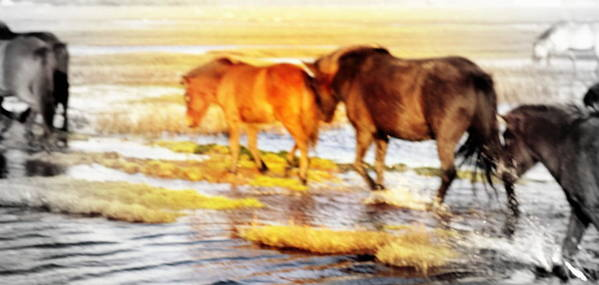 Horse Poster featuring the photograph Our Whole Life We Just Follow The Stream by Hilde Widerberg