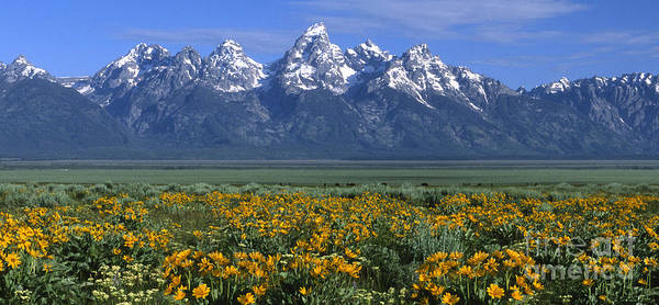 Grand Teton Poster featuring the photograph Grand Teton Summer by Sandra Bronstein