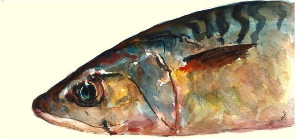 Horse Mackerel Poster featuring the painting Mackerel Fish by Juan Bosco