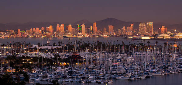 San Diego Poster featuring the photograph San Diego Skyline by Alexis Birkill