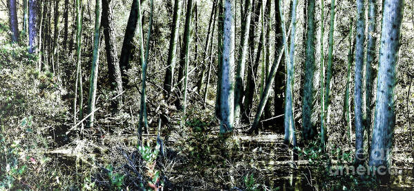 Mystery Poster featuring the photograph Mystery Forest by Olivier Le Queinec