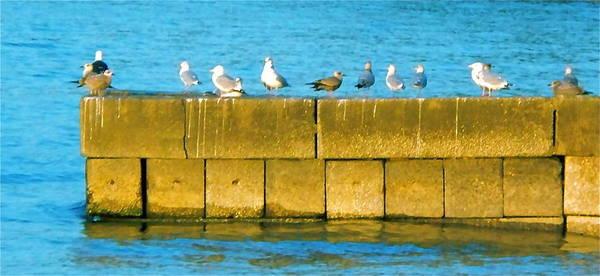 Poster featuring the photograph Gulls by Jennifer Addington