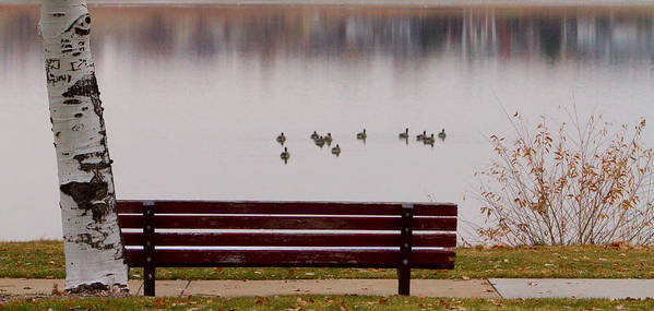 Aspen Poster featuring the photograph Lake Bench by James BO Insogna