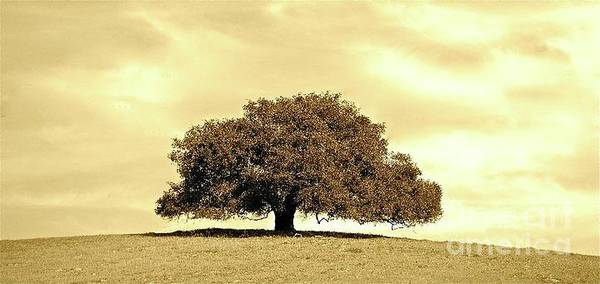 Tree Poster featuring the photograph Lone Tree by Lori Leigh