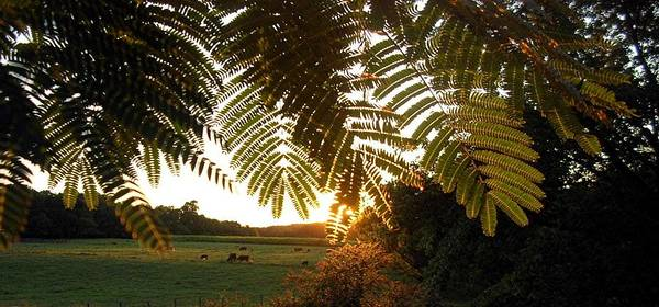 Trees Poster featuring the photograph Pasture At Sunrise by Caroline Urbania Naeem