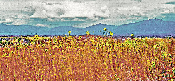 Fields Poster featuring the photograph Sunflower Field 1 by Steve Ohlsen