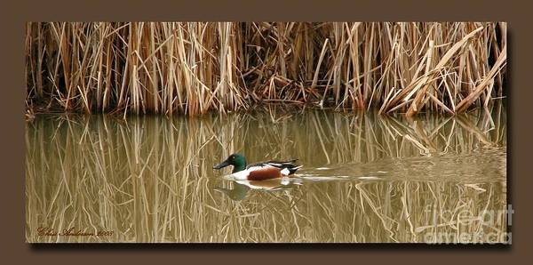 Faux Matting Poster featuring the photograph Swimming Among The Reeds by Chris Anderson