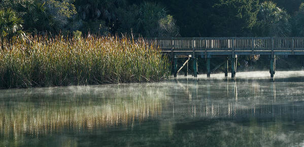 Florida Poster featuring the photograph Misty Pond by Jane Luxton