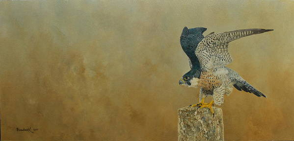 Erna Goudbeek Poster featuring the painting Peregrine Falcon by Erna Goudbeek