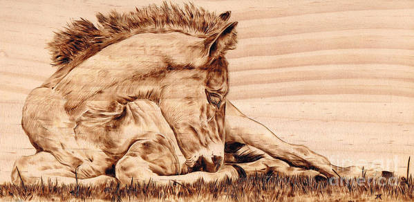 Colt Poster featuring the pyrography Tranquil by Paper Horses Jacquelynn Adamek