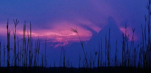 Landscape Poster featuring the photograph Wild Sky And Grasses by Greg Kear