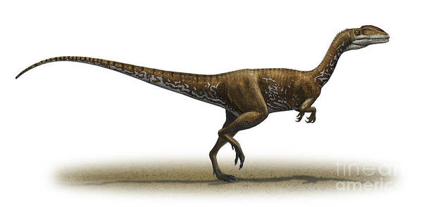 Horizontal Poster featuring the digital art Megapnosaurus Kayentakatae by Sergey Krasovskiy