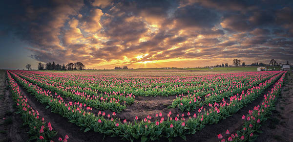 Travel Poster featuring the photograph 180 Degree View Of Sunrise Over Tulip Field by William Freebilly photography