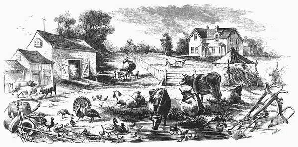 1870 Poster featuring the photograph American Farmyard, C1870 by Granger