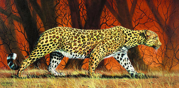 Leopard Poster featuring the painting On The Prowl by Don Griffiths