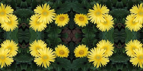 Yellow Poster featuring the photograph Yellow Daisy by Keri Renee