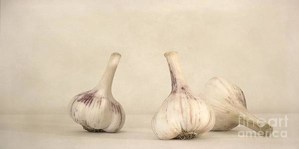 White Poster featuring the photograph Fresh Garlic by Priska Wettstein