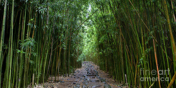 Bamboo Forest Poster featuring the photograph Bamboo Forest Trail Hana Maui by Dustin K Ryan