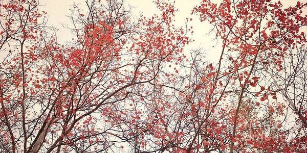 Red Poster featuring the photograph canopy trees II by Priska Wettstein