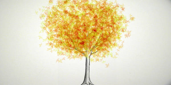 Maple Tree Poster featuring the digital art Maple Tree 1 by Syed Bilawal Kamal