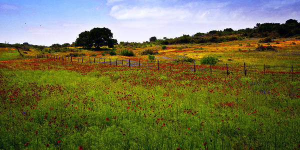 Texas Poster featuring the photograph Roadside Flowers by Tamyra Ayles