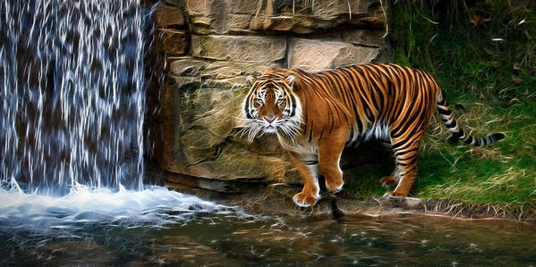 Tiger Poster featuring the photograph Tiger Falls by Steve McKinzie