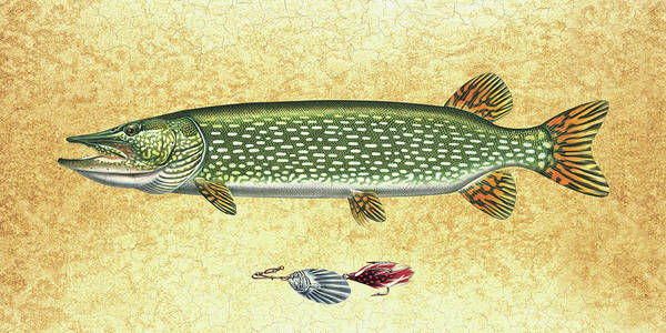 Jon Q Wright Poster featuring the painting Antique Lure And Pike by JQ Licensing