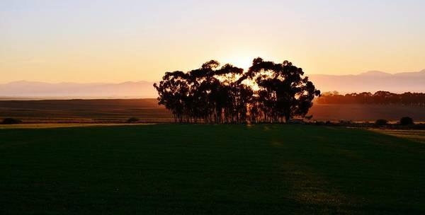 Landscape; Orange; Sunrise; Blue Gum Trees; Farm Land; Sun; Morning Light; Sky; Swartland; South Africa; Rural; Eucalyptus Trees; Poster featuring the photograph Eucalyptus Trees by Werner Lehmann