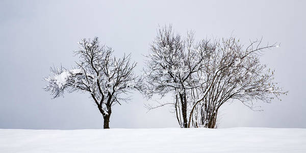 Tree Poster featuring the photograph Winter by Ian Middleton