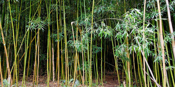 Bamboo Wind Chimes Poster featuring the photograph Bamboo Wind Chimes Waimoku Falls Trail Hana Maui Hawaii by Michael Bessler