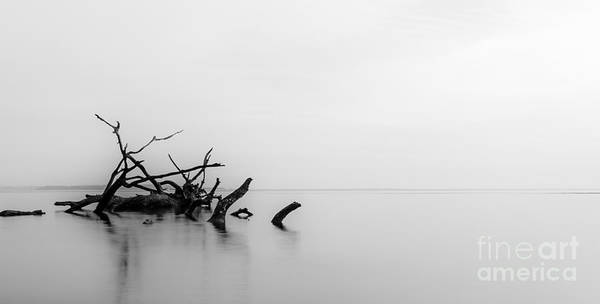 Big Talbot Island Poster featuring the photograph Big Talbot Island Black And White by Paul Griffin