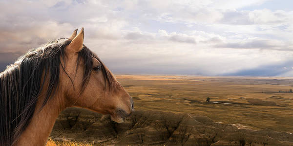Equine Poster featuring the photograph His Domain by Ron McGinnis