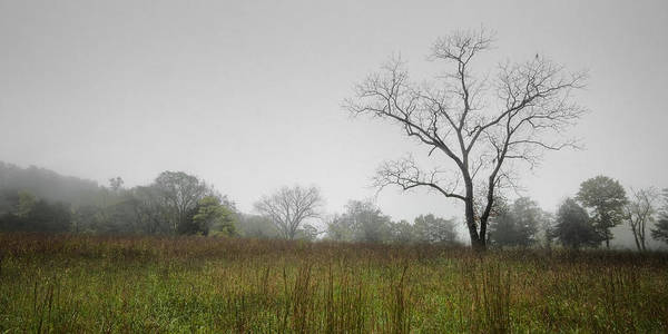 Landscape Poster featuring the photograph Morning Fog by Ryan Heffron
