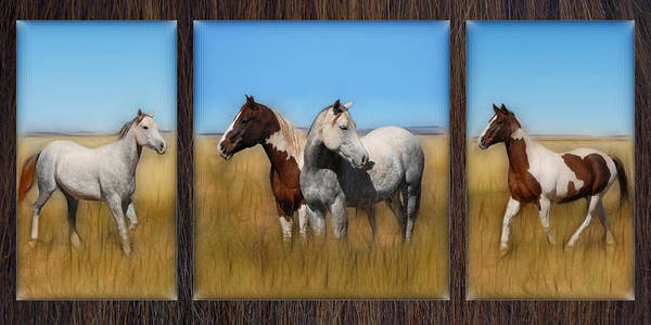 Horse Poster featuring the photograph Wild Horse Tryptic by Rich Beer