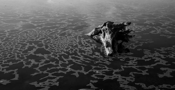 Driftwood Poster featuring the photograph Adrift by Alex Lapidus