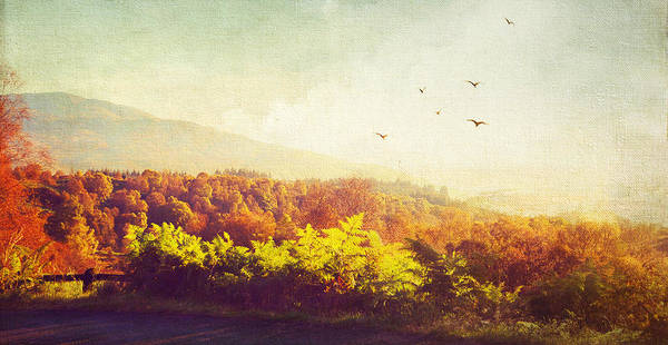 Scotland Poster featuring the photograph Hazy Morning In Trossachs National Park. Scotland by Jenny Rainbow