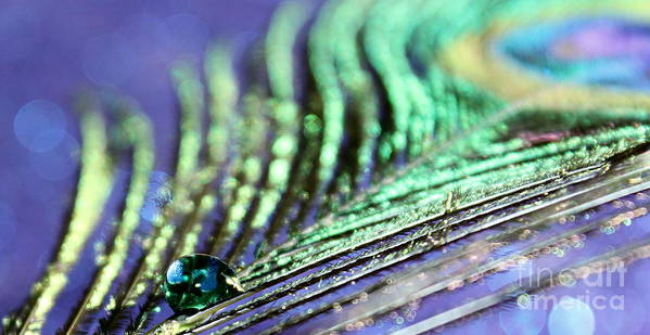 Peacock Feather Poster featuring the photograph Liquid Peacock by Krissy Katsimbras