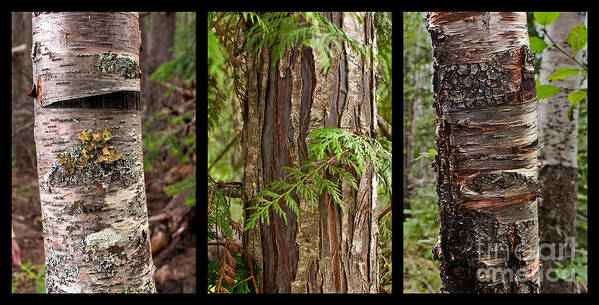 Tree Wear By Nature Poster featuring the photograph Tree Wear By Nature by Sandi Mikuse