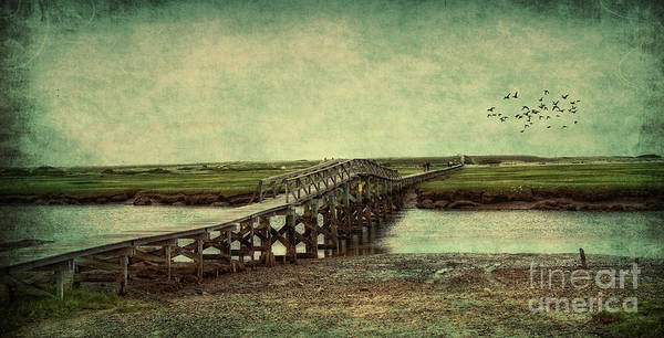 Cape Cod Poster featuring the photograph Marshland by Gina Cormier