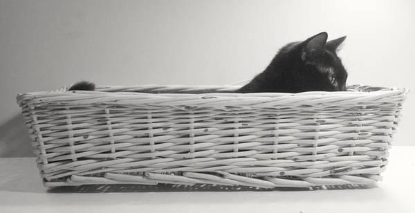 Cat Poster featuring the pastel Lurking In The Basket by Bernadette Kazmarski